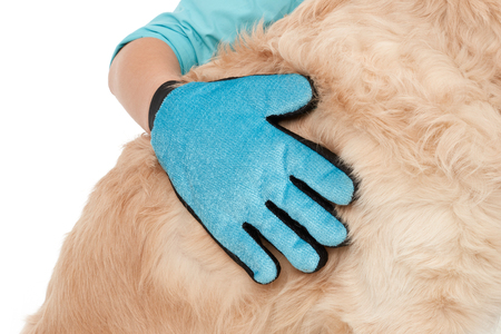 Cleaning glove on a dog's fur