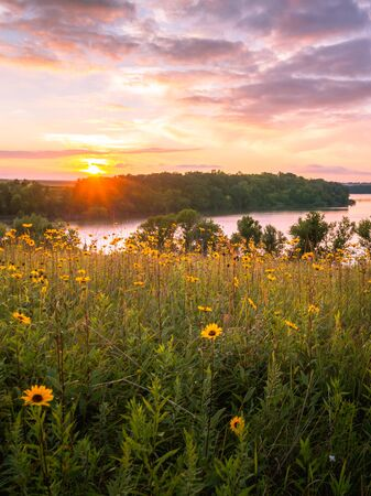 Photo for Wildflowers in a meadow over the lake at sunset - Royalty Free Image