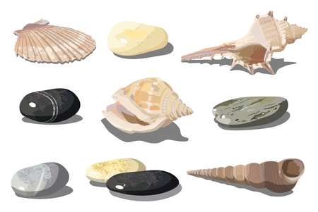 Illustration pour Vector realistic tropical shells and sea pebbles isolated on white background. EPS-10 separated by groups and layers for easy edit. - image libre de droit