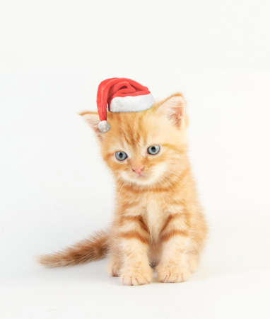 Photo pour Cat baby tabby Kitten Cute Beautifu With christmas hat on white background - image libre de droit