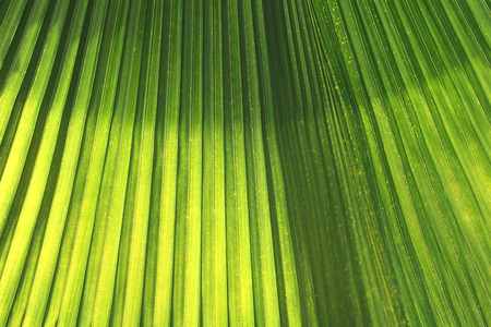 Green leaves with bright sunshine in the morning, the design concept for the background naturally.