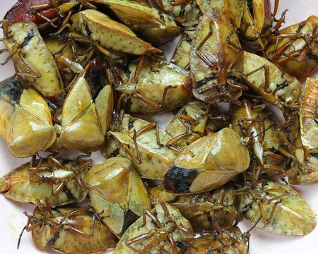 The Tessaratoma papillosa or Homoeocerus sp of fried,This food has been popular in the northeast of Thailand.