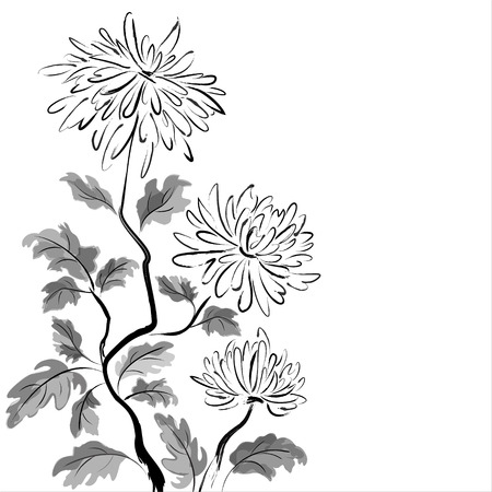 Illustration pour Chinese chrysanthemum  Ink painting on white background - image libre de droit