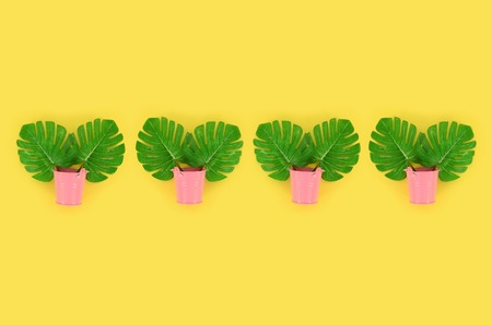 Tropical palm monstera leaves lies in a pastel pails on a colored background. Flat lay trendy minimal pattern. Top view.