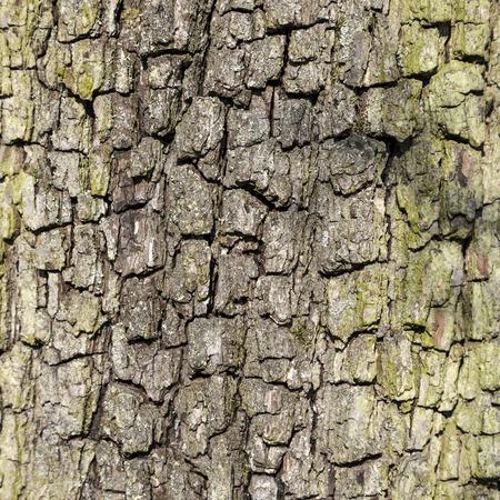 Foto de close up of bark of an oak tree gives a harmonic pattern - Imagen libre de derechos