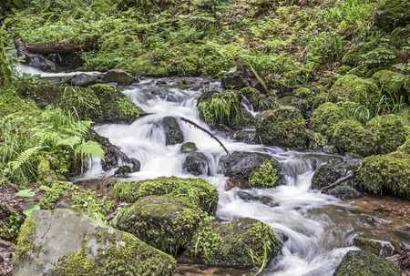 small creek in the forest flows over stones covered with moss