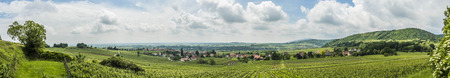 vineyard landscape in region Alsace, France near village of Barr