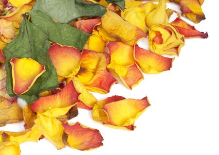 Background with colorful dry rose petals