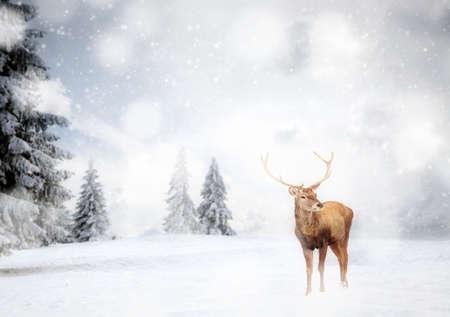 Photo pour magical Christmas card with noble deer male in fairy tale winter landscape - image libre de droit