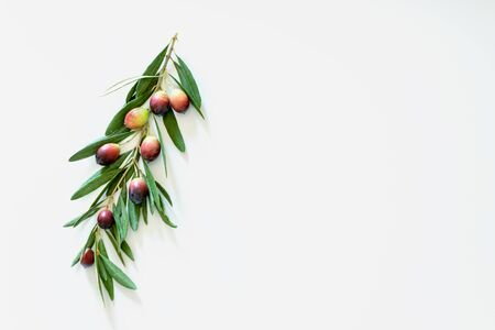 Foto per Ripe colorful dark and green olives on a branch. Copy space. - Immagine Royalty Free