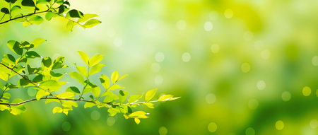 Photo pour Summer green leaves on a shiny background - image libre de droit