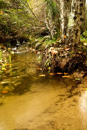 View of beautiful autumn set on a creek in Monchique, Portugal.