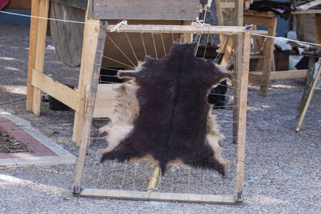 Close up view of an Animal hide hanging up to dry on a medieval fair.