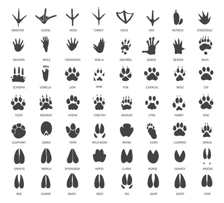 Illustration for Vector set of animal tracks - Royalty Free Image