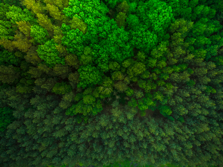 Colorful trees in spring forest,top down aerial.