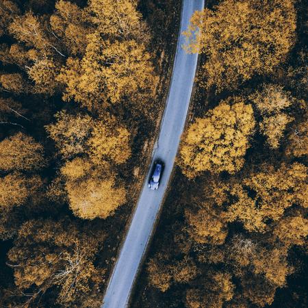 Photo pour Autumn weather trasition changing colors in forest - image libre de droit