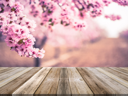 Photo pour Spring blooming trees,wooden board empty table, product mock up display or montage. - image libre de droit