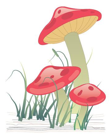 Three mushrooms on green grass. Vector illustration