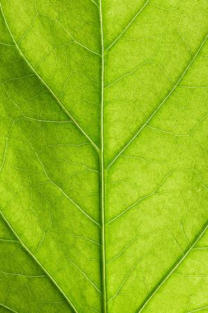Green leaf close up