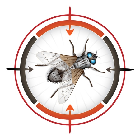 Sniper target with housefly