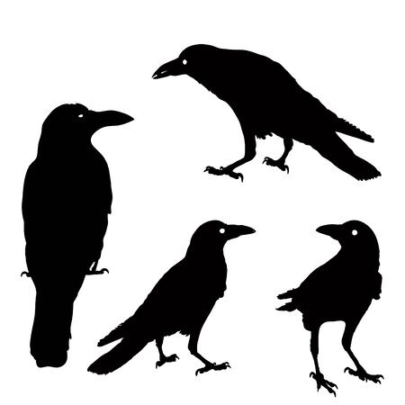 Illustration pour silhouette of a crows in different positions. vector illustration. black ravens on grey. Isolated. rook illustration. - image libre de droit