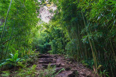 Photo for Bamboo Forest along Pipiwai Trail at Haleakala National Park on the Hawaiian island of Maui, USA - Royalty Free Image