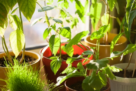 Ecology concept  Potted green plants on window sill indoors