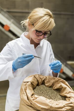 Photo for Scientist taking samples of dry CBD hemp seeds from sack with tweezers and glass tube in factory. Medicinal and recreational marijuana plants cultivation. - Royalty Free Image