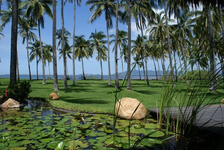 A beautiful garden within a coconut plantation