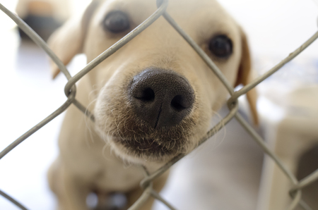 Curious dog is a dog poking his nose through a fence curiously wondering what's going on.
