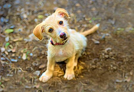 Photo pour Curious Dog is a Cute Puppy Looking Up With A Funny Look on Its Face - image libre de droit