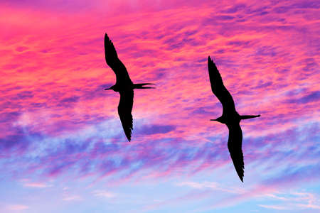 Photo for Two Birds Are Flying Together With Wings Spread Silhouetted Against A Vivid Colorful Sunset Sky - Royalty Free Image