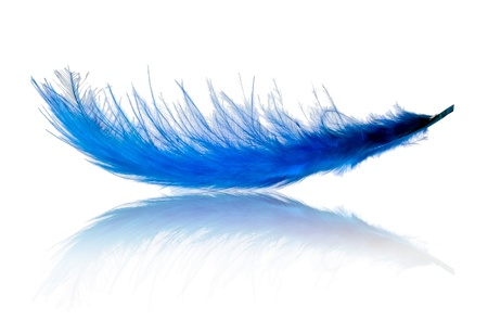 Blue flying feather over white
