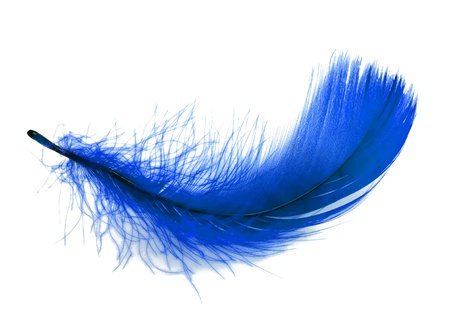 Blue soft feather on white background