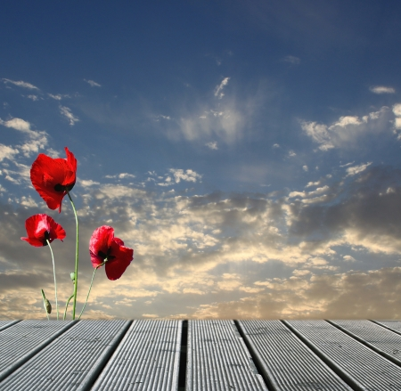 Wood walkway over sky with red poppies