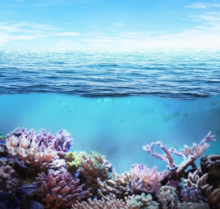 Sea underwater and coral reefs on sunny day