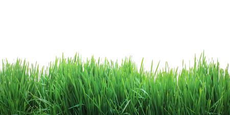 Foto de Growing fresh grass - Imagen libre de derechos
