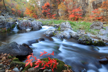 The autumn stream water