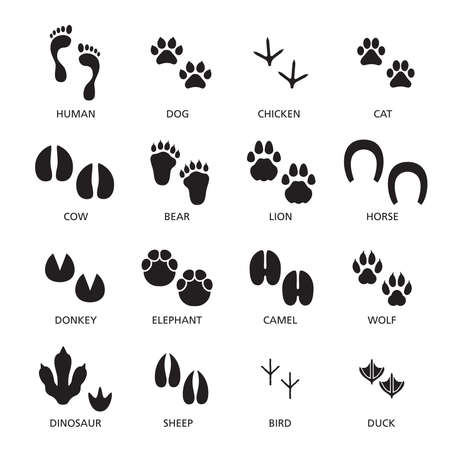 Illustration pour Vector set of footprint of different animals and human. - image libre de droit