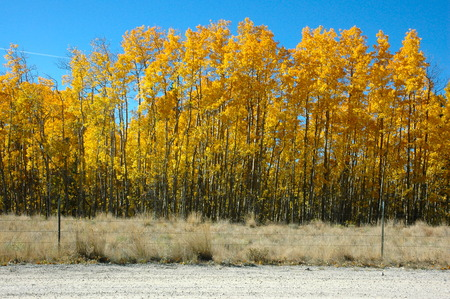 Row of trees by county road