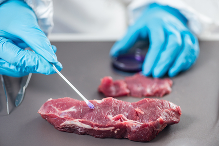 Quality control expert inspecting at meat  in the laboratory