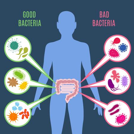 Illustration pour Intestinal flora gut health vector concept with bacteria and probiotics icons, Human flora good and bad microorganism illustration - image libre de droit