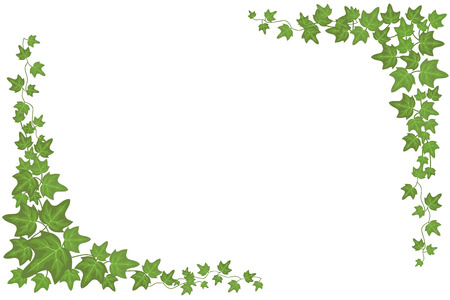 Illustration pour Decorative green ivy wall climbing plant vector frame - image libre de droit