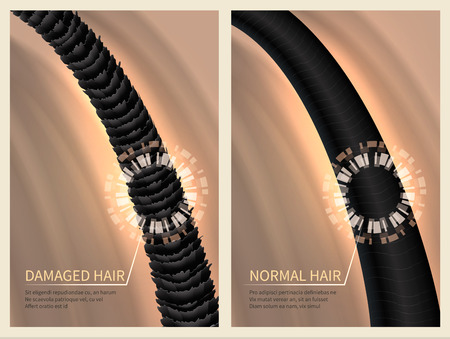 Closeup damaged harsh and normal healthy hair. Vector illustration for haircare concept