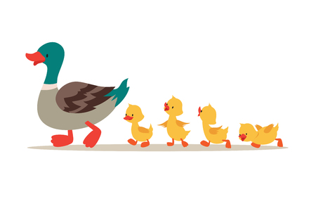 Illustration pour Mother duck and ducklings. Cute baby ducks walking in row. Cartoon vector illustration. Duck mother animal and family duckling - image libre de droit