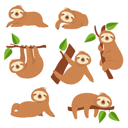 Illustration pour Cute sloths. Cartoon sloth hanging on tree branch. Baby jungle animal vector isolated characters. Lazy wild sloth, wildlife animal slow on tree illustration - image libre de droit