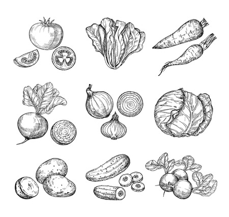 Illustration pour Sketch vegetables. Fresh tomato, cucumber and carrots, potatoes. Hand drawn onions, radish and cabbage. Garden vegetable vector set of tomato and potato, organic fresh food illustration - image libre de droit