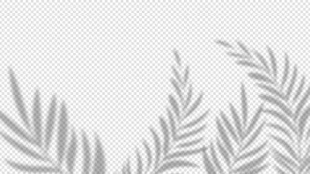 Illustration for Shadow palm leaves. Overlay plant effect on transparent background. Summer minimalistic blurred nature vector banner. Palm shadow overlap, covers branch leaf illustration - Royalty Free Image