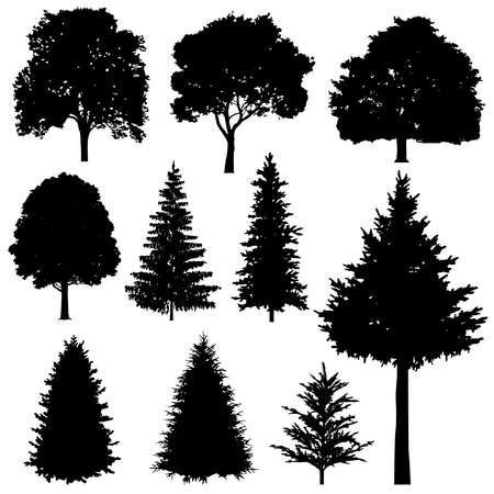 Illustration pour Forest coniferous and deciduous fir trees vector silhouettes set. Evergreen tree plant, illustration of silhouette wood tree - image libre de droit