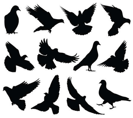 Photo pour Flying dove vector silhouettes isolated. Pigeons set love and peace symbols. Black shape form dove and pigeon silhouette illustration - image libre de droit